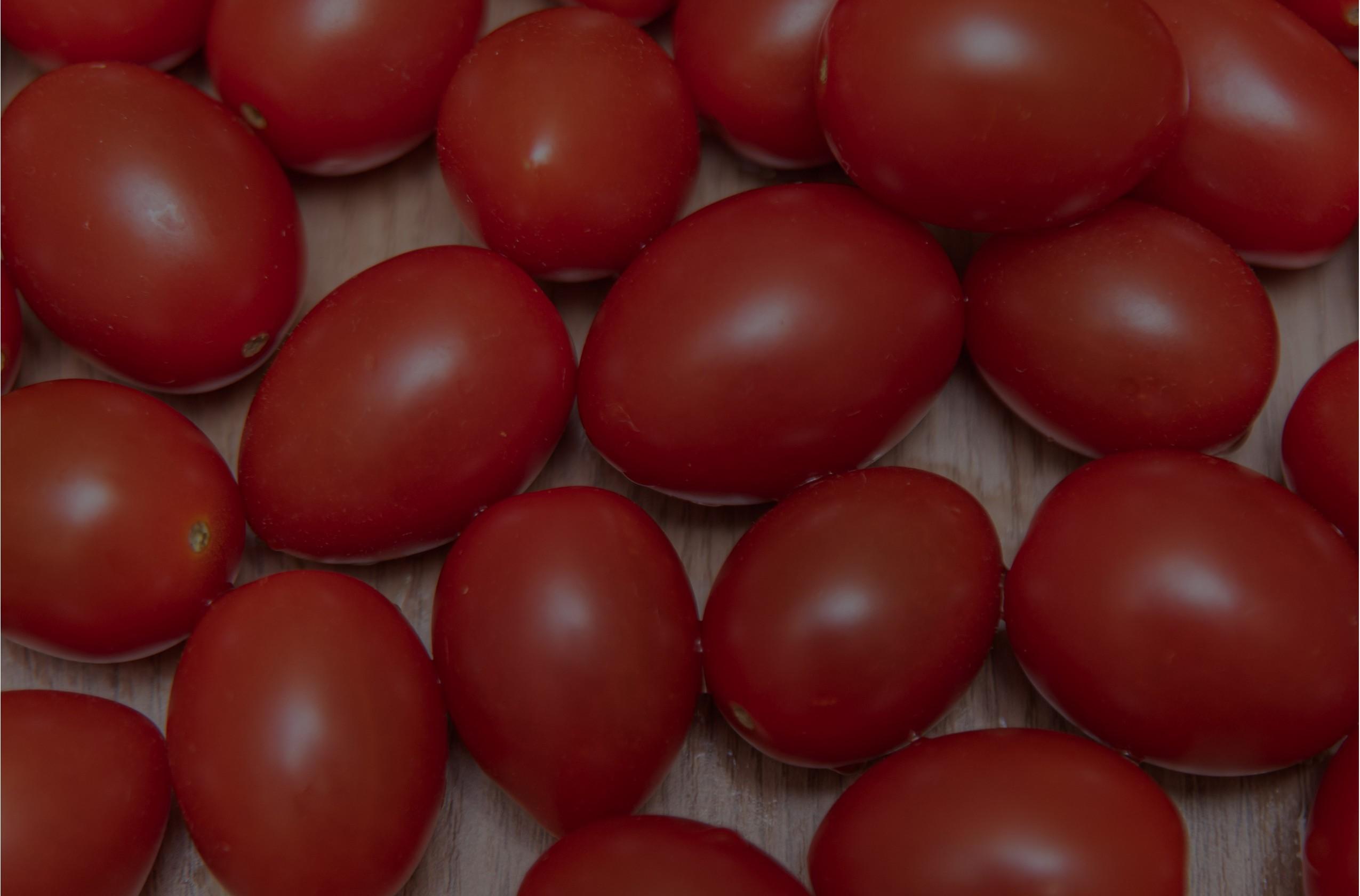 Pomidory tunelowe, pomidor matias, pomidor vitalina oraz inne odmiany nasion pomidorów tunelowych